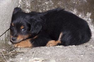 Frightened Abandoned Puppy Lying in the Corner