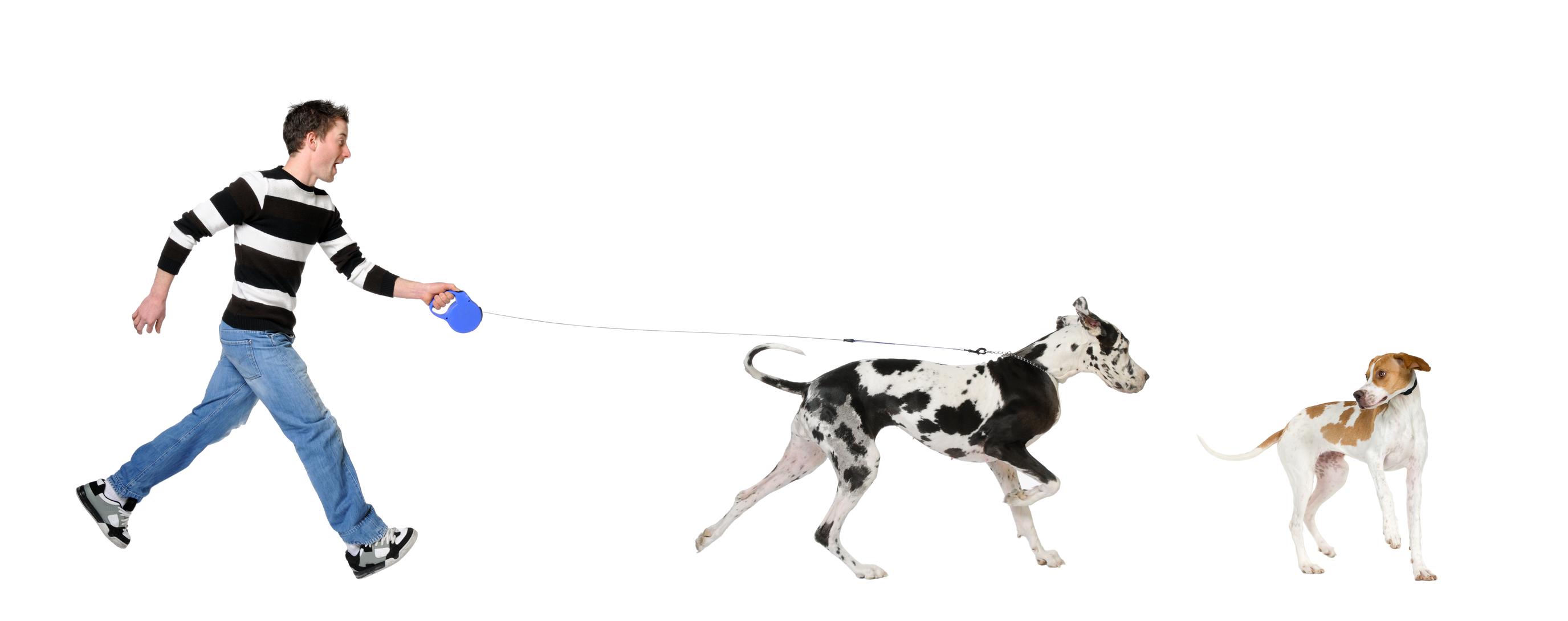 leash-pulling