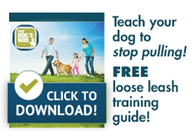 Get our leash walking guide