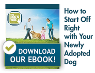eBook download, start off right with your adopted dog