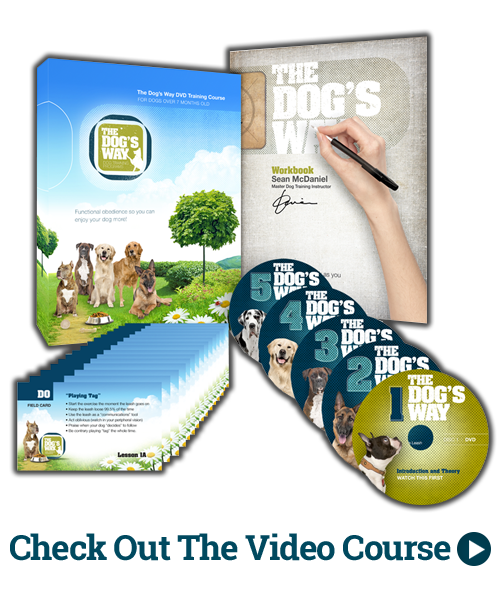 Dog Training Video Course