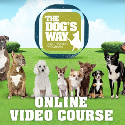 Dog training online course
